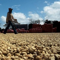 The Italy is growing in the coffee market